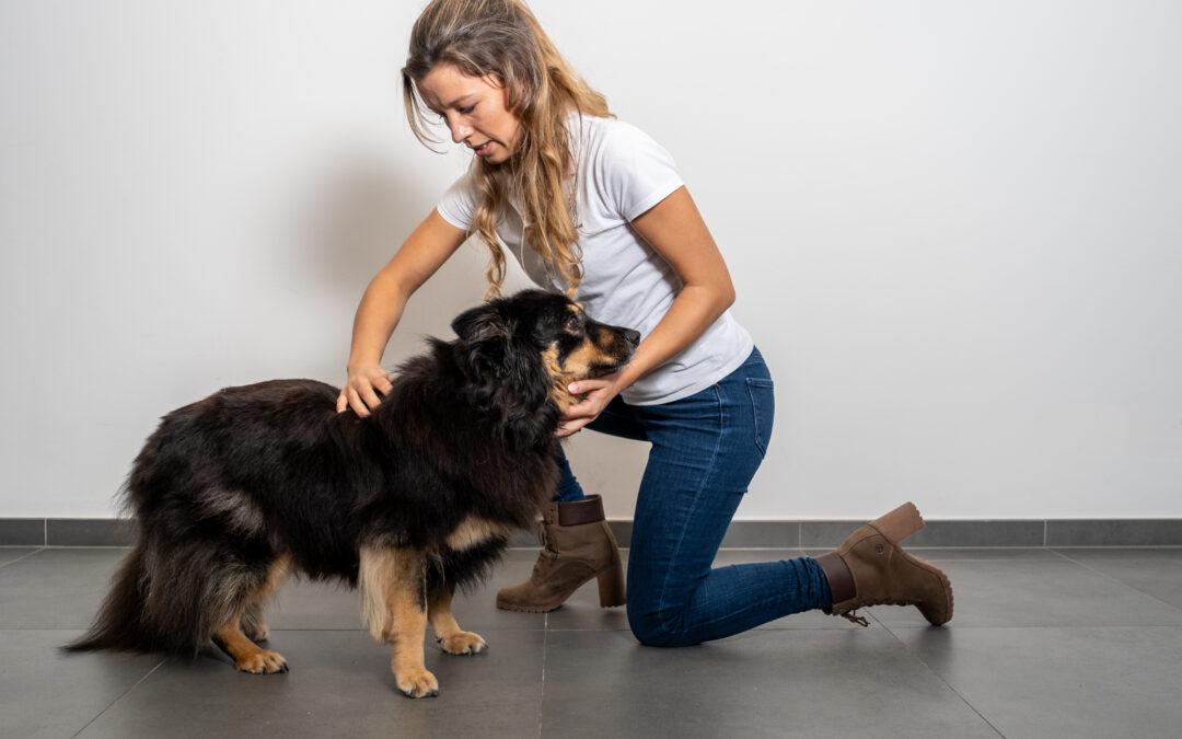 – Osteopathie – bij dieren